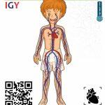 AR Flash Cards Anatomy