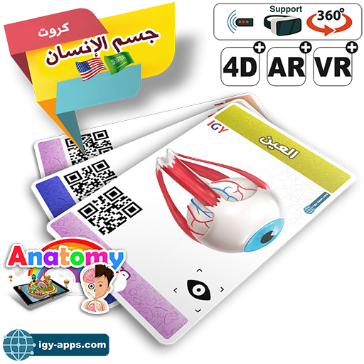 AR Flash Cards Anatomy