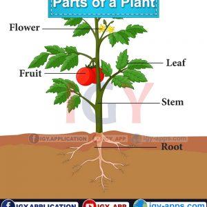 أجزاء النبات 🖨️ عربي - إنجليزي 🖨️ وسائل تعليمية