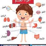 أجزاء جسم الإنسان🖨️ عربي - إنجليزي 🖨️ وسائل تعليمية