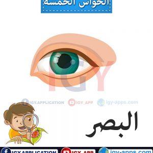 الحواس الخمسة 🖨️ عربي - إنجليزي 🖨️ وسائل تعليمية
