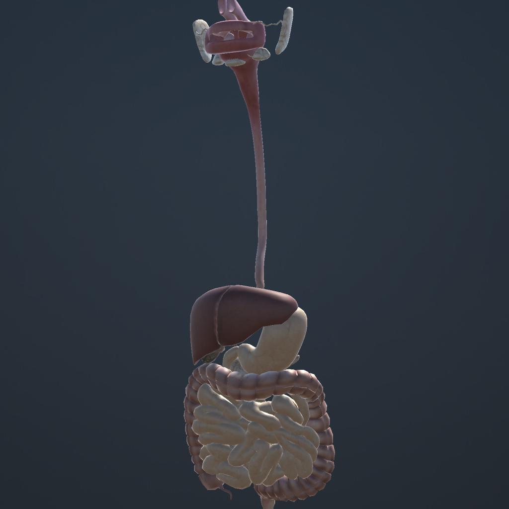 تشريح جسم الإنسان 3D